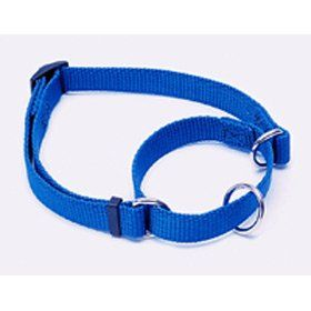 Nylon Dog Collar (Blue, 14 20 Inch L x 3/4 Inch W)