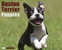 Boston Terrier Puppies 2012 Calendar (Calendar)