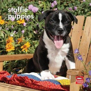 (7x7) Staffordshire Bull Terrier Puppies   2013 Mini